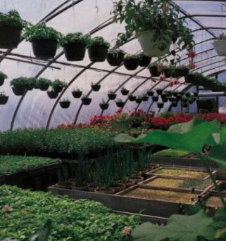 steps in building a greenhouse