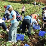 Fall And Vegetable Harvesting