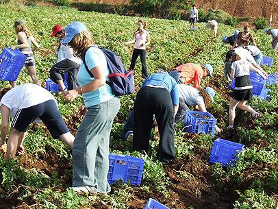 vegetable harvesting 1
