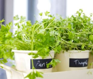 The Aromatic Herbs and the Science of Growing Them ...