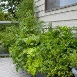The Balcony Garden – Reasons to Give It a Try?