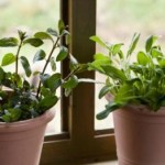 Container Gardening – Get Awesome Results With The Right Container