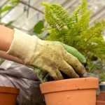 The Right Way to Move Garden Plants