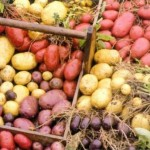 Potatoes – Plant the Best Variety of Your Choice