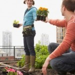 What Plants Are Right for a Rooftop Garden?