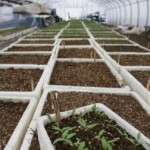 To Change or Not to Change the Greenhouse Soil