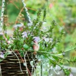 The Best of Gardening in Hanging Baskets