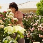 Rose Gardening Tips – How to Get Fairytale Beautiful Roses