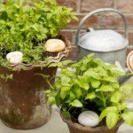 Shade and Spectacular Container Gardens