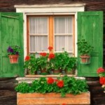 Window Boxes or Stunning Container Gardening