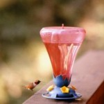 Hummingbird Feeders for a Lovely Garden Ecosystem