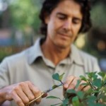 Pruning and the Best Tools for It