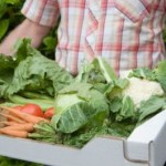 Grow Your Own Salad Veggies