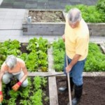 From Spring to Summer in Your Vegetable Garden