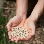 Choosing and Dealing with Vegetable Garden Seeds