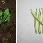 How to Choose Easy to Grow Vegetables