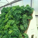 All the Reasons to Use Hydroponic Growing Systems