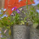 Choosing the Right Plants for Hanging Baskets