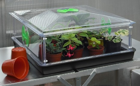 Growing Plants in Propagators