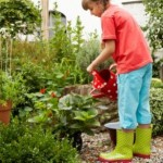 Start Coming Up with Your Own Container Gardening Ideas