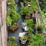 The Increased Popularity of Container Gardening Vegetables