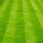 How to Make Sure that You Keep Your Green Lawn