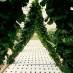 What Is Hydroponics and Is It Really Useful?