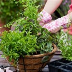 Spruce up Your Garden for Summer BBQs