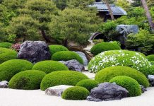 Start-from-Scratch-with-Japanese-Garden-Plants