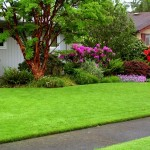 suggestions for drought survival of your garden