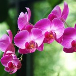 orchid care mistakes that you can avoid