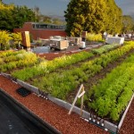roof top vegetable garden