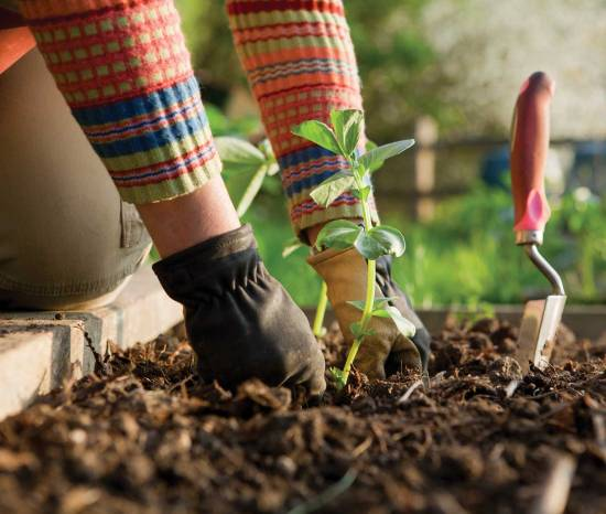 truths behind the popular gardening myths