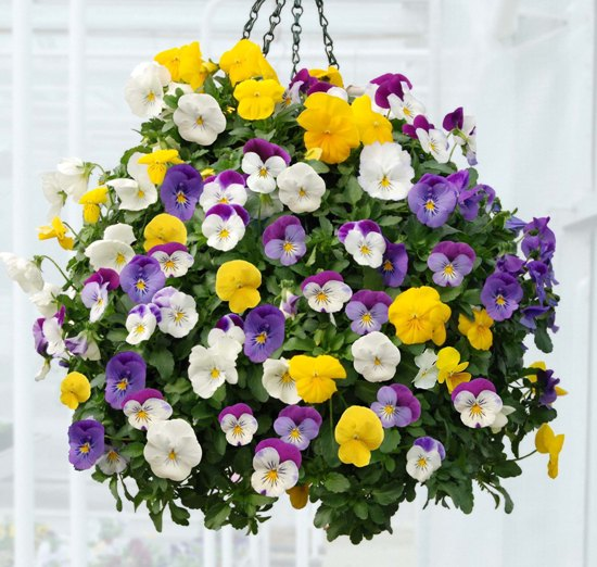 ways to take care of hanging flower baskets