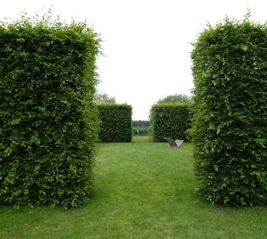 ways to take care of your garden hedges